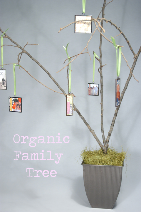 Make This An Organic Family Tree Cathie Filian Steve Piacenza